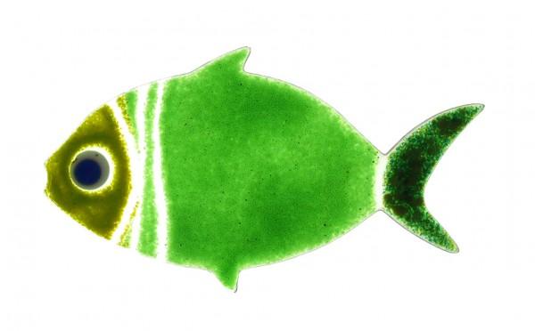Fusingglas Fisch bauchig